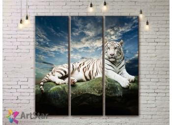 Модульные картины с животными, Art. AMM778024