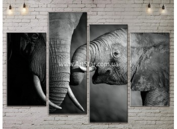 Модульные картины с животными, Art. ANIM778037
