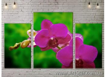 Модульные Картины Цветы, Art. FLOW777037