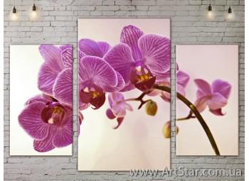 Модульные Картины Цветы, Art. FLOW777043