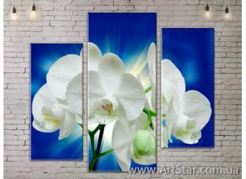 Модульные Картины, Цветы, Art. FLOW777245