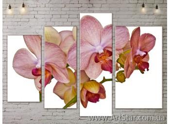 Модульные Картины, Цветы, Art. FLOW777300