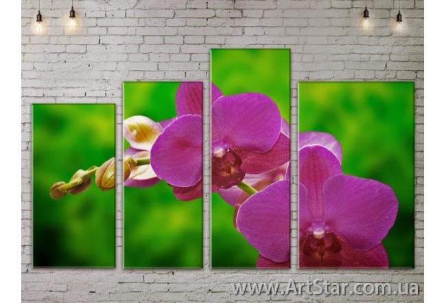 Модульные Картины, Цветы, Art. FLOW777320