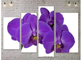 Модульные Картины, Цветы, Art. FLOW777356