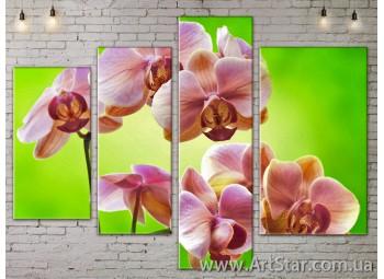 Модульные Картины, Цветы, Art. FLOW777416