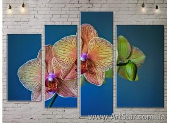 Модульные Картины, Цветы, Art. FLOW777438