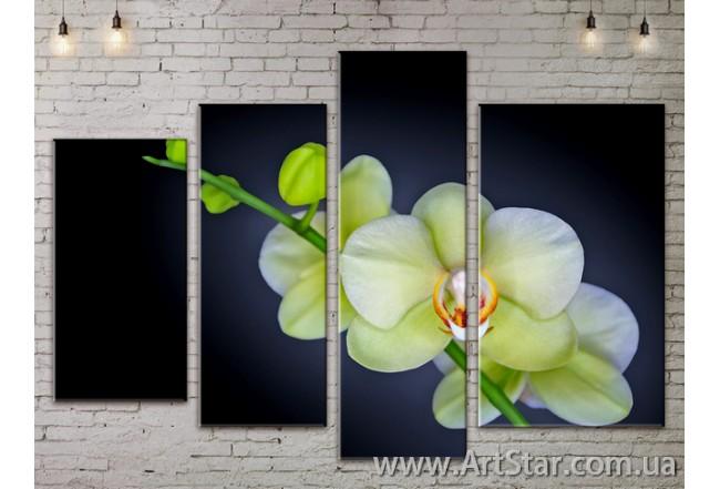 Модульные Картины, Цветы, Art. FLOW777514