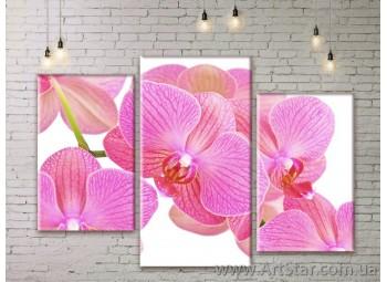 Модульные Картины Цветы, Art. FLWM0135