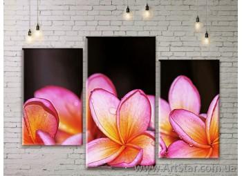 Модульные Картины Цветы, Art. FLWM0209