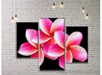 Модульные Картины Цветы, Art. FLWM0251