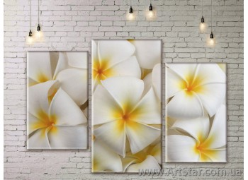 Модульные Картины Цветы, Art. FLWM0299